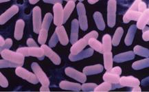 La listeriosis, un grave problema de seguridad alimentaria por su letalidad