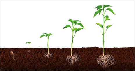 Vamos echando raíces… agradecemos vuestro fantástico riego