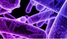 Proceso de limpieza y desinfección para el control de la Listeria monocytogenes