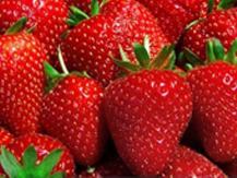¿Por qué llamamos fresa al fresón? Cinco claves para distinguir una especie de la otra