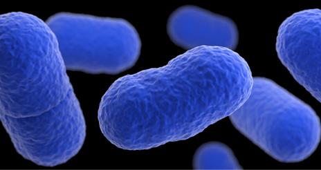 Reglas básicas para evitar infecciones de listeriosis en las poblaciones de riesgo