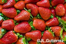 Las fresas, el oro líquido del verano en zumos, batidos, smoothies, infusiones o gazpachos