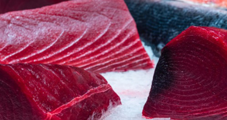 Máxima seguridad al procesar atún y similares: temperatura correcta y manipulación eficiente