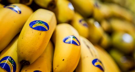 Carta abierta de la Asociación de Productores de Plátanos de Canarias a las colectividades