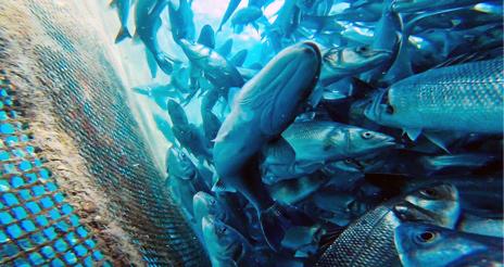 Conservar nuestros océanos a través de la compra de pescado certificado y sostenible