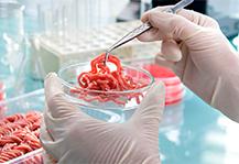 El trabajo de los veterinarios, decisivo para garantizar la inocuidad y seguridad alimentaria